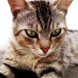 Vila för katt Arkivbild