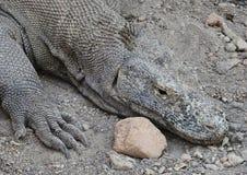 Vila för Komodo drake arkivfoton