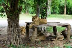 Vila för Lion Royaltyfri Bild