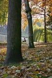vila för park Arkivfoto