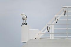 Vila för Seagull Royaltyfria Foton