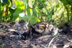 Vila f?r inhemsk katt som ?r utomhus- royaltyfri foto