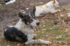Vila familjen för tillfällig hund royaltyfri foto
