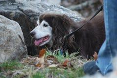 Vila hunden Fotografering för Bildbyråer
