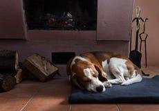 Vila hunden nära till en spis royaltyfri foto