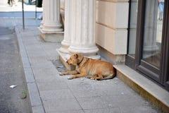 Vila hunden som ligger på trottoaren Royaltyfri Fotografi