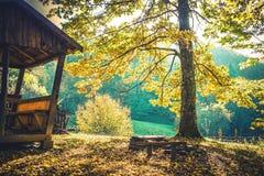 Vila i den gröna skogen Royaltyfria Bilder