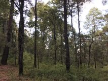 Vila i en härlig skog royaltyfria bilder