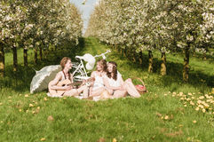 Vila i körsbärsröda blomningar royaltyfri bild