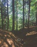 Vila i skogen Arkivbild