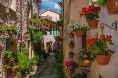 Vila medieval de Spello com flores Imagem de Stock Royalty Free