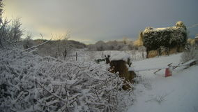 Vila mediterrânea no inverno Foto de Stock Royalty Free