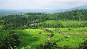 A vila nos campos da selva e do arroz Bali, Indonésia vídeos de arquivo