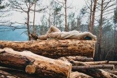 Vila på trädstammen Arkivfoton