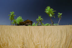 Vila Paddy Fields Foto de Stock Royalty Free