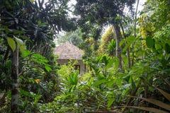 Vila pequena na selva Imagens de Stock Royalty Free