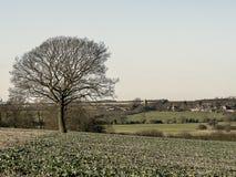Vila solitária da árvore do cropfield novo na distância Imagens de Stock