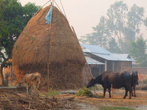 Vila típica, planícies de Nepal Imagem de Stock