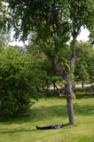 Vila under trädet Arkivbilder