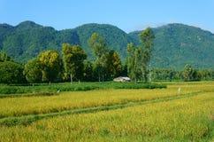 Vila vietnamiana, montanha, casa, campo de almofada Imagem de Stock