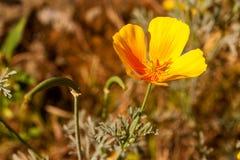 Vilaflor Wildflowers Royalty-vrije Stock Fotografie
