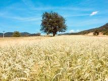 Vilage αγροτικής φύσης τομέων δέντρων στοκ εικόνες