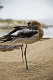 vilande seagulls Arkivfoton