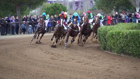 Galloping thoroughbred horses in Cos de Sant Antoni racing competition. Slow motion