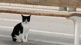 vild katt Arkivbild