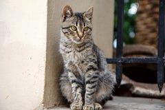 Vild katt i Aten, Grekland Royaltyfria Foton