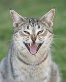 Vild katt i vildmark Queensland royaltyfri fotografi