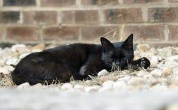 Vild svart katt Arkivfoto