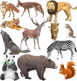 Vilda djur Royaltyfri Bild