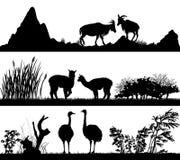 Vilda djur (get, alpaca, struts) i olika livsmiljöer Arkivbilder