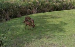Vilda djur i Busch trädgårdar Tampa Bay, Florida Arkivfoton