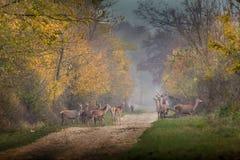 Vilda djur i skog Arkivfoton