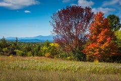 Vildblommaäng i de Catskill bergen royaltyfri bild