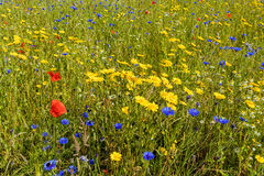 Vildblommaäng, Worcestershire, England Royaltyfria Bilder