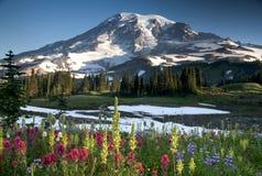 Vildblomma av Mount Rainier Royaltyfri Foto