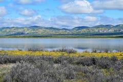 Vildblomma sjö Arkivfoto