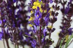 Vildblommanärbild blom- abstrakt bakgrund Arkivfoto