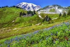 Vildblommaparadismontering Rainier National Park Washington Arkivbild
