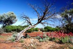 vildblommar för blå sky Royaltyfri Bild