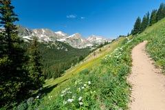 vildblommar för klättringbergtrail Royaltyfri Fotografi