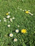Vildblommar i gräs Arkivfoton