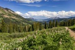 Vildblommasäsong längs bergssidan i den krönade butten Colora Arkivfoto