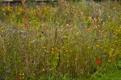 Vildblommaträdgård Royaltyfri Fotografi
