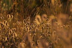 Vildblommor i äng under solnedgång Arkivbilder