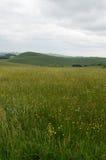 Vildblommor i den mångfaldiga dalen, Staffordshire, England Royaltyfri Bild