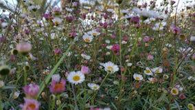 Vildblommor i israel parkerar Arkivfoton